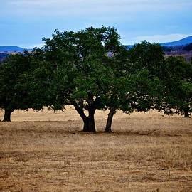 Kristina Deane - Llano Texas Landscape