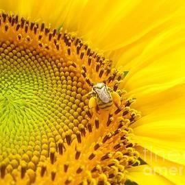 John King - Loaded Bee