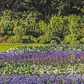 Elvis Vaughn - London Garden