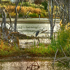 Kimberleigh Ladd - Lone Blue Heron in Fall