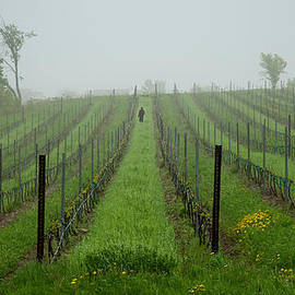 Lone Figure in Vineyard in the Rain on the Mission Peninsula Michigan