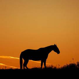 Ken McAllister - Lone Horse