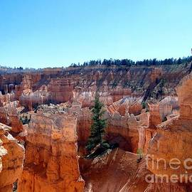 Barbie Corbett-Newmin - Lone Pine Amidst Bryce Canyon Hoodoos