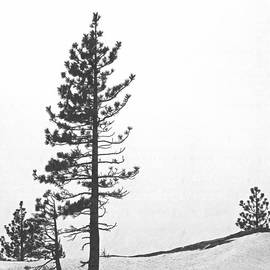Frank Wilson - Lone Pine in Snow
