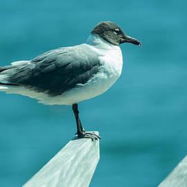 Charles A LaMatto - Lone Seagull