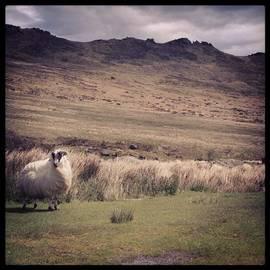 Sarah Walsh - Lone Sheep #ireland #countryside #sheep