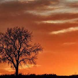 Nikolyn McDonald - Lone Tree in Winter - Sunset - Silhouette