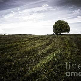 John Farnan - Lone tree