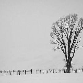 Priscilla Burgers - Lone Tree