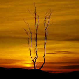 Derek Moffat - Lone tree sunset