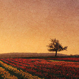 R christopher Vest - Lone Tree Sunset On The Tulip Fields