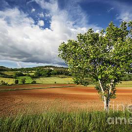 Tony Priestley - Lone Walnut Tree reworked