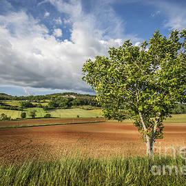 Tony Priestley - Lone Walnut Tree