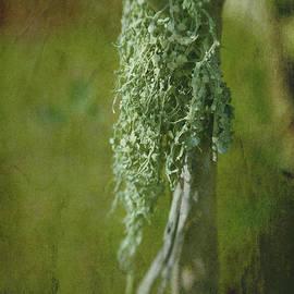 Judi Bagwell - Lonely Lichen
