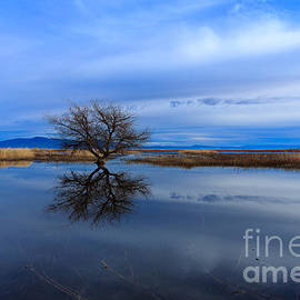Reflective Moments  Photography and Digital Art Images - Lonely One