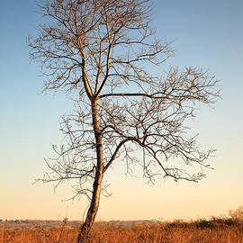 Joshua McDonough - Lonely Tree