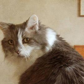 Jayne Wilson - Long-Haired Cat Portrait