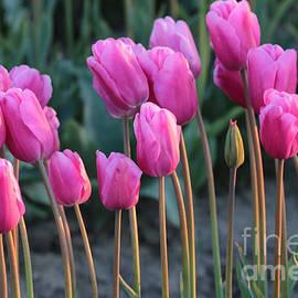 Carol Groenen - Long Stemmed Tulips
