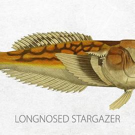 Longnosed stargazer