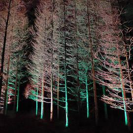 Richard Reeve - Longwood Gardens - Tree Stand at Night