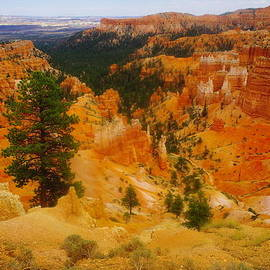 Jeff  Swan - Looking Into Bryce