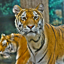 AIReStudios Photography - Los Tigres