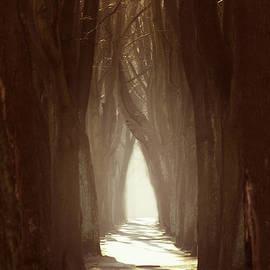Jaroslaw Blaminsky - Lost Alley