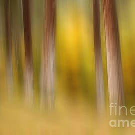 Reflective Moments  Photography and Digital Art Images - Lost in Autumn