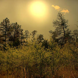 Nina Fosdick - Lost Meadow