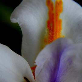 Michael Hoard - Louisiana Iris