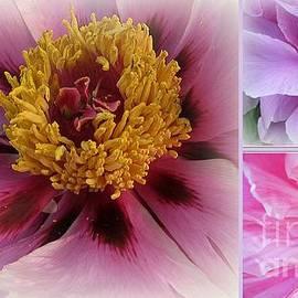Photographic Art and Design by Dora Sofia Caputo - Love and Romance - Peonies