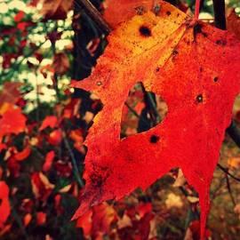 Sarah Pemberton - Love Autumn