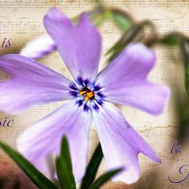 Trina  Ansel - Love is Music
