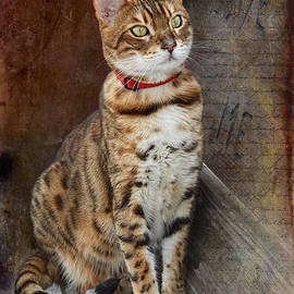 Barbara McMahon - Love Me Asian Leopard Cat