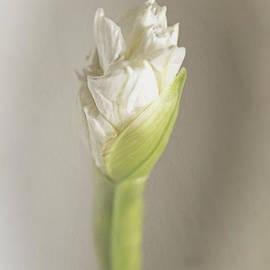 Ella Kaye Dickey - Love New Beginnings Floral Art