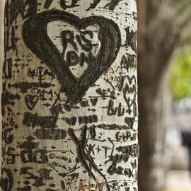 Nomad Art And  Design - Love Tree