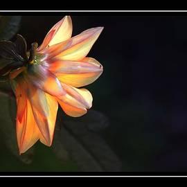 Alice Gipson - Lovely Flower