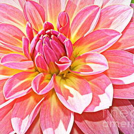 Photographic Art and Design by Dora Sofia Caputo - Lovely in Pink - Dahlia