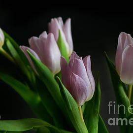 Tracy  Hall - Low Light Tulips