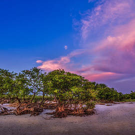 Marvin Spates - Low Tide Mangrove