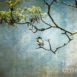 Jai Johnson - Lucky Bird