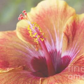 Sharon Mau - Luminescence Exotic Tropical Hibiscus Makawao Maui Hawaii