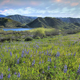 Lynn Bauer - Lupines in Lost Canyon