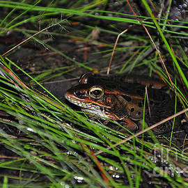 Al Powell Photography USA - Lurking Leopard Frog
