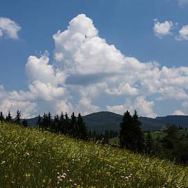 Georgia Mizuleva - Lush Wildflower Meadow in the Mountains