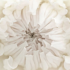 Jennie Marie Schell - Macro Dahlia Flower Ivory White