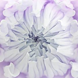 Jennie Marie Schell - Macro Dahlia Flower Lavender Pastels