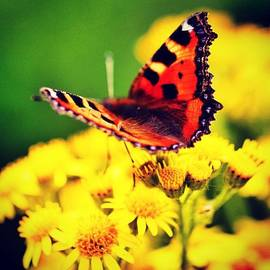 Luisa Azzolini - #macro #nature #flowers #butterfly