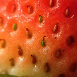 Marian Palucci - Macro Strawberry