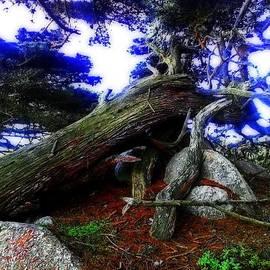 Joseph J Stevens - Magic Forest